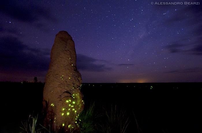 Cupinzeiros Bioluminescentes Parque Nacional das Emas