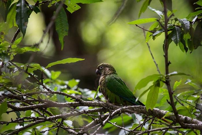 Aves em Sao Tome das Letras MG
