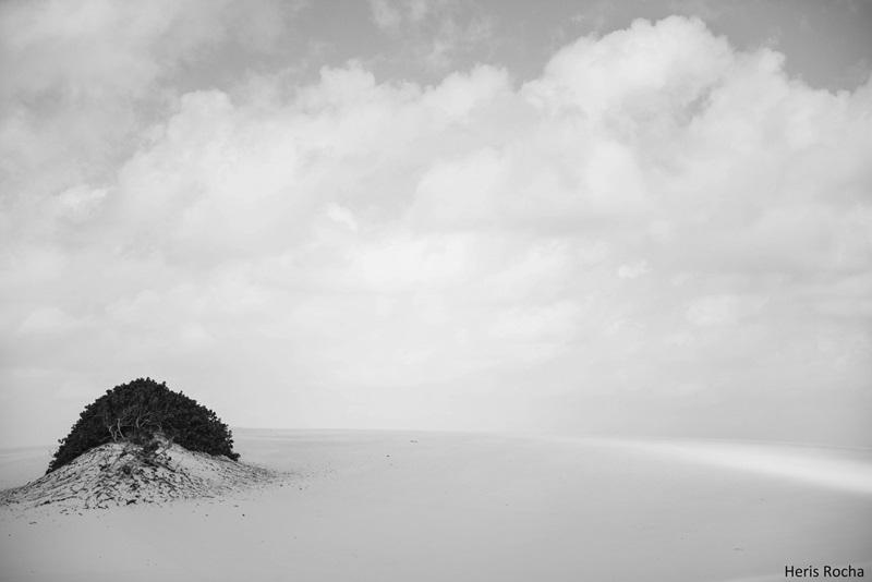 Arvore no Parque Nacional dos Lencois Maranhenses