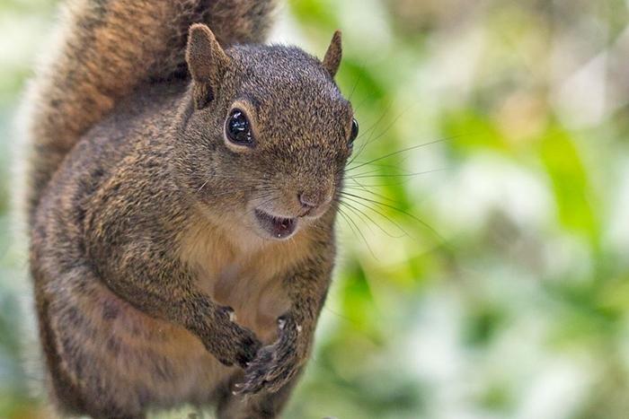 Esquilo em Sao Thome das Letras