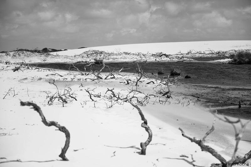 Galhos de Arvores nos Lencoes Maranhenses