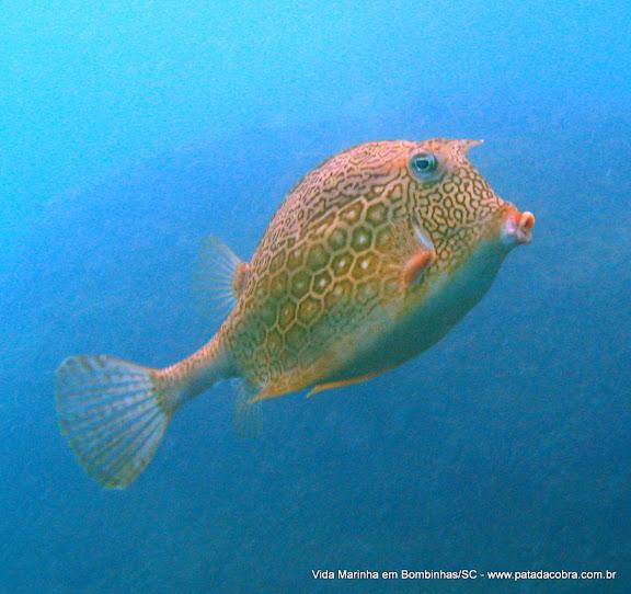 Mergulho em Bombinhas Peixe