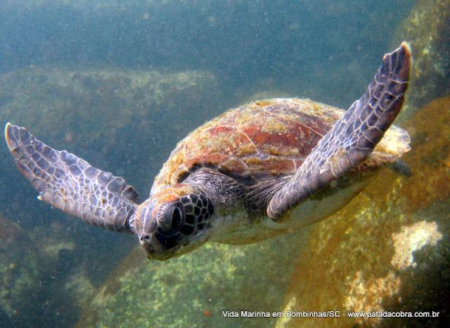 Mergulho em Bombinhas Fauna