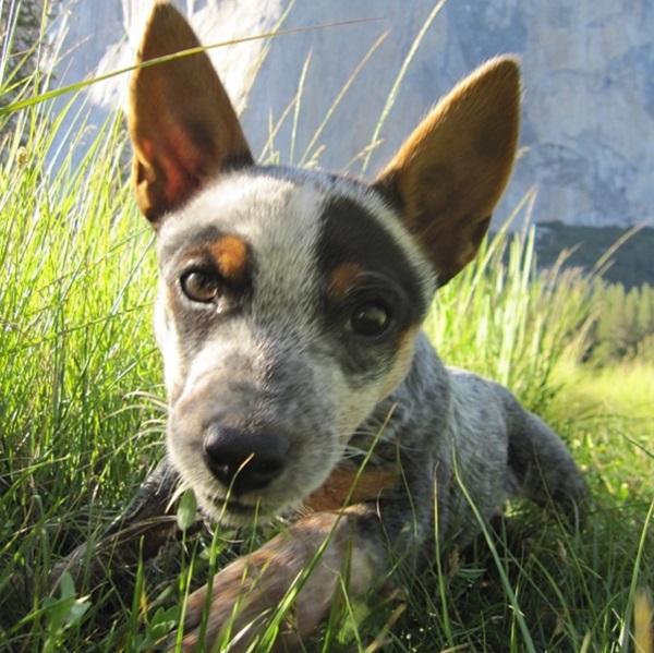 Whisper cão basejumper